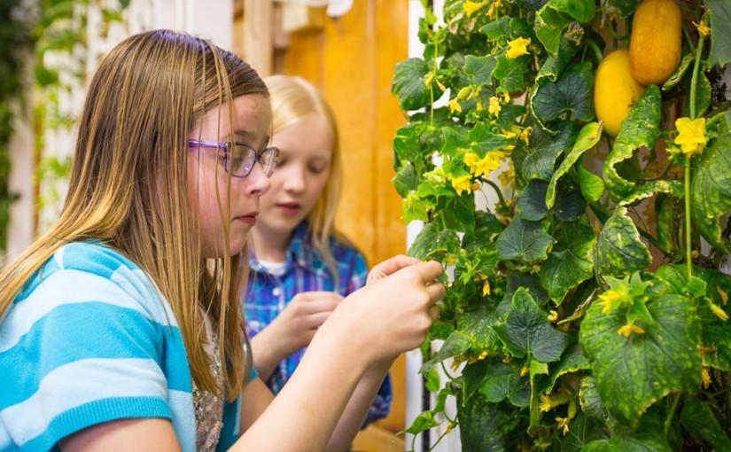 Edible Learning Lab: Grundschüler lernen, wie das Essen auf den Tellerkommt