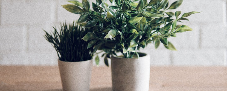 Grüne Lufterfrischer Auf Diese Zimmerpflanzen Schwört Sogar Die