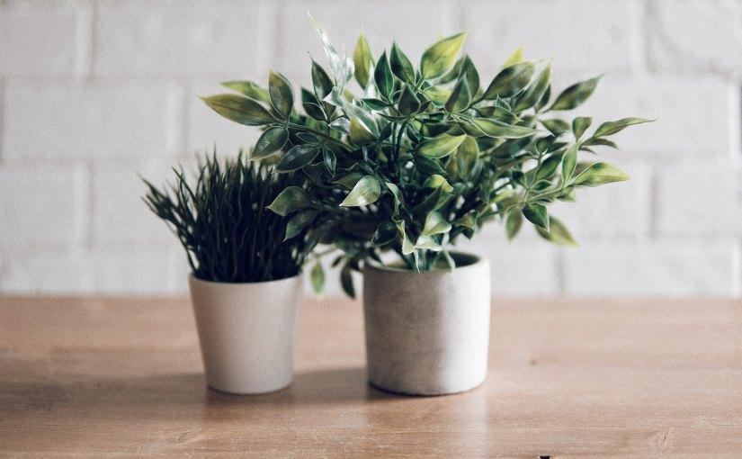 Grüne Lufterfrischer: Auf diese Zimmerpflanzen schwört sogar dieNASA