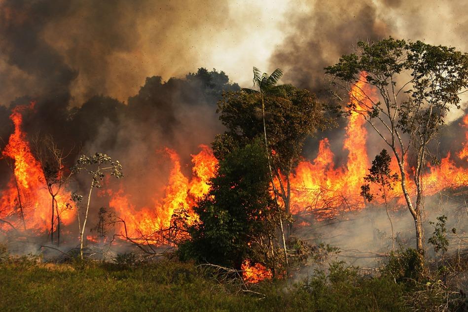 Abholzung des Regenwaldes in Kolumbien