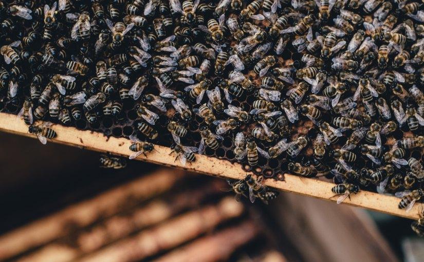 EU-Mitgliedsstaaten stimmen für das Verbot von bienenschädlichen Insektiziden