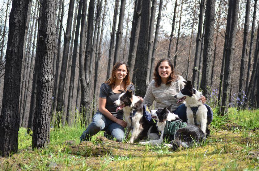 Border Collies retten den Wald indem sie Samen säen