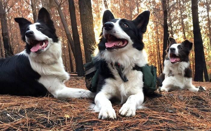 Das Olivia und Summer retten den Wald in Chile