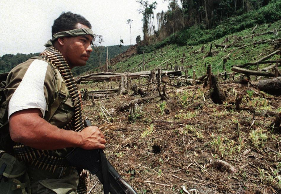 Die Abholzung des Regenwaldes schreitet voran illegaler Kokainhandel