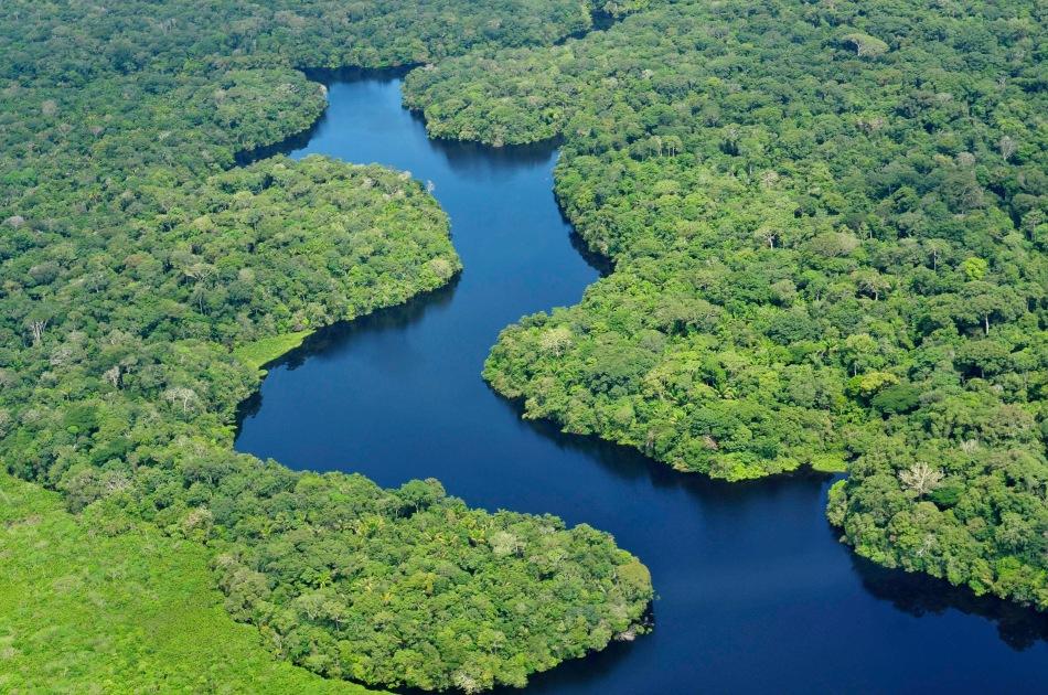 Die Grüne Lunge der Erde der Amazonas.jpg
