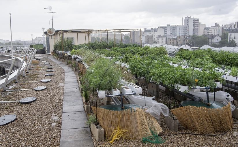 Pariser Regionalregierung bepflanzt ein Drittel aller städtischen Dächer und Fassaden mit Obst undGemüse