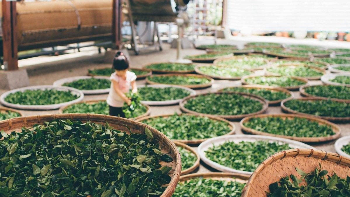 Inselnation Taiwan führt flächendeckendes Komplettverbot von Einwegplastik aller Art ein