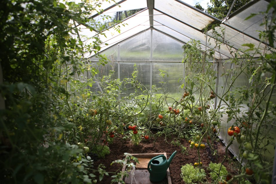 Urban Farming wird Trend auf der ganzen Welt