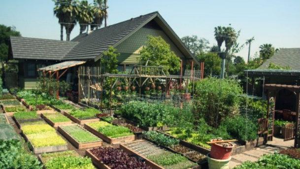 UrbanHomeStead Dervaes Familie baut Gemüse selbst an