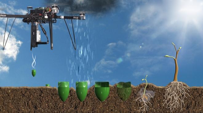 Drohnen könnten helfen den Wald aufzuforsten