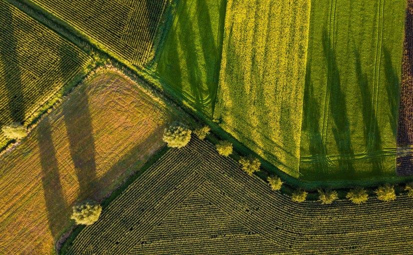 Wie der Einsatz von Drohnen bei Klimaforschung, Aufforstung und intelligenter Logistik helfenkönnte